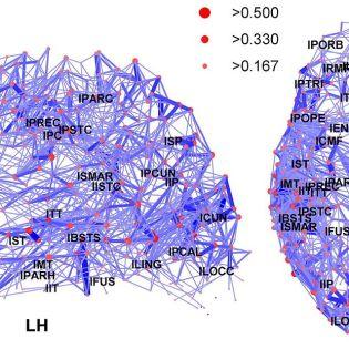 Network representation of brain connectivity. Hagmann P, Cammoun L, Gigandet X, Meuli R, Honey CJ, Wedeen VJ, Sporns O License: CC-BY